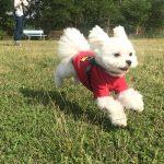 愛犬エマと軽井沢旅行!!犬連れでも行ける人気カフェ「天空カフェ・アウラ」と絶景も楽しめる「浅間山高原ドッグラン」