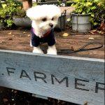 駒沢公園(駒沢大学駅)「Mr.FARMER(ミスターファーマー)」カフェのテラスでまったり(犬連れペットOK・テラス席)