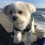 インスタ映えカフェ「Pacific DRIVE-IN(パシフィック ドライブイン)」から湘南の海を満喫!!(犬連れペットOK・テラス席)