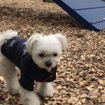 愛犬エマと伊豆旅行!!犬専用複合施設「愛犬の駅」のドッグランでも走らない・・・