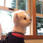 雨の多い軽井沢で犬連れでも店内OKなカフェCoffee House Shaker(コーヒーハウスシェーカー)で愛犬エマとカフェタイム(犬連れペット可・店内OK)