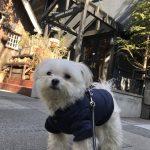 湘南鎌倉で愛犬エマとモーニング「GARDEN HOUSE Restaurant(ガーデンハウスレストラン)」(犬連れペット可・テラス席)