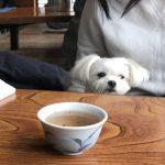 愛犬エマと海鮮伊豆ランチ「ぼら納屋」!!あったか店内でゆっくり(犬連れペット可・店内OK)