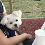 犬連れ旅行で愛犬エマと軽井沢アウトレットへ!!「Ron Herman(ロンハーマン)アウトレット」に大満足