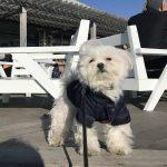 湘南カフェ「Pacific DRIVE-IN(パシフィックドライブイン)」は愛犬エマとのホットステーション(犬連れペット可・テラス席)