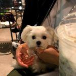 スターバックスコーヒー二子玉川公園店のテラス席で夏夜の風を感じる愛犬エマ(犬連れペットOK・テラス席)