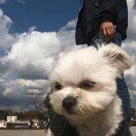 二子玉川(にこたま)の多摩川沿いで愛犬エマ(犬連れ・ペット)と青空さんぽ