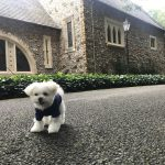 那須高原・犬連れ観光旅行に!「那須ステンドグラス美術館」で愛犬エマとゆったりとした時間を。