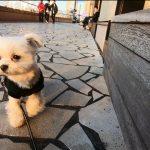 西日の下で「STAR BUCKS COFFE(スターバックス・スタバ)アクアシティお台場店」で愛犬エマと東京景色を堪能(犬連れペット可・テラス席OK)