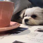 住宅街のカフェ「用賀倶楽部(ようがくらぶ)」で愛犬エマと休日モーニング(犬連れペット可・テラス席店内OK)