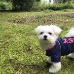 犬連れ那須旅行!!「ゲストハウスもみの木(ペンション)」で愛犬エマと宿泊(犬連れホテル)