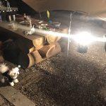 犬連れ那須旅行「那須バーベキューガーデンWILD FOREST」で愛犬エマとディナーBBQ!!(犬連れOK)