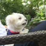 犬連れ那須旅行CHEESE GARDEN カフェ&ガーデン 「しらさぎ邸」で愛犬エマと落ち着いた時間を。(犬連れペット可・テラス席OK)