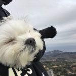 愛犬エマとの犬連れ伊豆観光旅行。「静岡県伊東市大室山」で、愛犬エマと空中散歩!!リフト犬連れOK