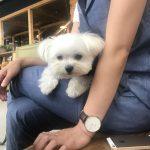 犬連れ那須旅行で突然の雨、愛犬エマと那須塩原のカフェChus(チャウス)で雨宿り(犬連れペット可・屋根付テラス席)