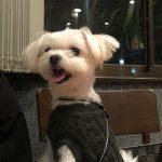 犬連れ伊豆旅行に店内OK和食ディナー!!「和山海料理 宇賀神」で舌鼓(店内ペットOK/犬連れ可)