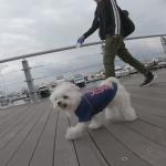 犬連れ横浜観光にマリーナで海辺のベイサイドウォーク(アウトレット隣接横浜ベイサイドマリーナ)