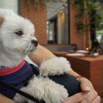 鎌倉小町通り、犬連れ店内OKの「BRUNCH KITCHEN(ブランチキッチン)」で愛犬エマと休日モーニング(朝食)