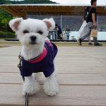 熱海犬連れ観光(旅行)!!絶景インスタ映え!ブランコのあるカフェ「COEDA HOUSE」(コエダハウス)