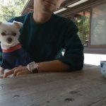 犬連れ富士山ドライブ!!テラス席のみ犬連れ可の「ほうとう富士の茶屋」で吉田のうどんランチ♪