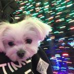 伊豆ぐらんぱる公園のイルミネーションに愛犬エマと感動!!(犬連れOK/ペット可)