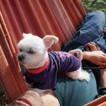 山中湖インスタ映え「Hammock Cafe(ハンモックカフェ)」にてゆらりとした時間を(犬連れ富士山観光)