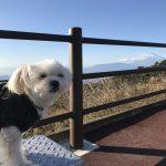 犬連れ伊豆旅行!!伊豆スカイラインから絶景富士山を眺めながら爽快ドライブ!!