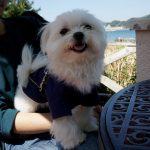 海辺カフェ「なぎさ橋珈琲」(神奈川県逗子市)にて犬連れで海風を感じながら逗子モーニング(朝食)(犬連れペット可・テラス席のみ)