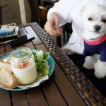 茅ヶ崎「サザンビーチカフェ」で潮風を感じながら愛犬エマと湘南モーニング(朝食)(犬連れペット可・屋根付きテラス席)
