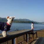 富士山観光・山中湖犬連れドライブ!!愛犬エマと湖畔散策