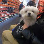 横浜ベイサイドアウトレットで愛犬エマと店内犬連れショッピング!!