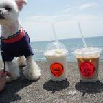 犬連れOK「Pacific DRIVE-IN 七里ガ浜(パシフィックドライブイン)」で愛犬エマと湘南カフェタイム
