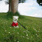 犬連れ箱根ドライブ観光!!富士芦ノ湖パノラマパーク草原で箱根絶景ピクニック