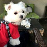 代官山のおしゃれレストラン「IVY PLACE(アイヴィープレイス)」で愛犬エマとモーニング(犬連れペット可・テラス席)