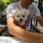 和モダンなテラス席!!軽井沢「くつかけステイダイニング」で美味しい蕎麦ランチ(犬連れペット可・テラス席)#犬連れ軽井沢旅行