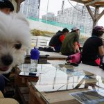 勝どき(月島・築地)「マグロ卸のマグロ丼の店」で東京湾と海鮮丼モーニング兼ランチ!!(犬連れペット可・店内OK)