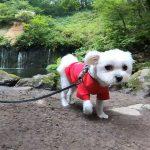 軽井沢で犬連れ観光!!「白糸の滝」でマイナスイオンの癒し#犬連れ軽井沢旅行