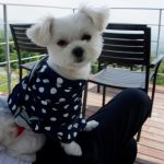 インスタ映えな絶景カフェ「天空カフェ・アウラ」で愛犬エマと軽井沢を一望!!(犬連れペット可・テラス席)#犬連れ軽井沢旅行