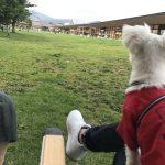 【保存版】愛犬と行く軽井沢旅行!!おすすめ観光スポットとカフェレストラン(ペット連れ可)