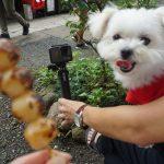 東京犬連れ日帰り観光!!愛犬エマと調布市深大寺周辺を散歩。
