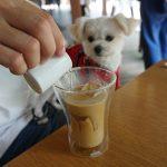 軽井沢旅行人気スポット「ハルニレテラス」内のカフェ「丸山珈琲(MARUYAMA COFFEE」で愛犬エマとひと休憩