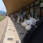 ロンハーマンがある!!「軽井沢・プリンスショッピングプラザ(アウトレット)」にて愛犬エマと犬連れショッピング!!#軽井沢犬連れ旅行