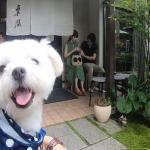 愛犬エマと犬連れ軽井沢旅行に「東間(とうま)」で絶品蕎麦ランチ(犬連れペット可・テラス席)