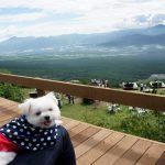 インスタ大人気スポット!!オシャレソファの並ぶ「清里テラス」からの山頂絶景を犬連れで楽しむ!