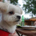 軽井沢犬連れOKの宿「ペンションひまわり」で愛犬エマと高原バーベキュー(BBQ)!!
