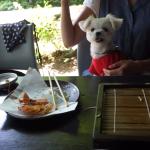 愛犬エマとの犬連れ軽井沢旅行!!ハルニレテラス「せきれい橋 川上庵」犬連れランチで絶品お蕎麦!!