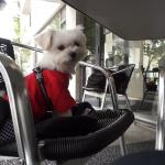 調布市仙川のおしゃれカフェ「LARGO」で愛犬エマとまったりランチタイム(屋根付きテラス席・犬連れ可/ペットOK)