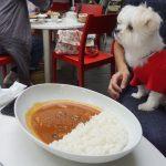 山梨犬連れ観光ドライブ!!「八ヶ岳倶楽部」で雨のランチタイム(犬連れOKペット可/屋根付き)