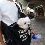 犬連れ富士山ドライブ!!御殿場プレミアム・アウトレットにて愛犬エマとウィンドウショッピング