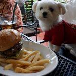 河口湖、ハンバーガーレストラン・カフェ「MOOSE HILLS BURGER(ムースヒルズバーガー)」犬連れランチ(屋根付きテラス席と店内・犬連れ可/ペットOK)